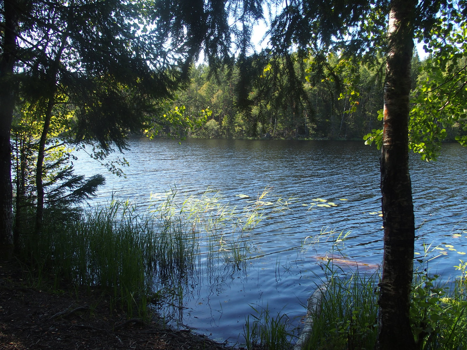 SÖ E5.3 Vedasjön