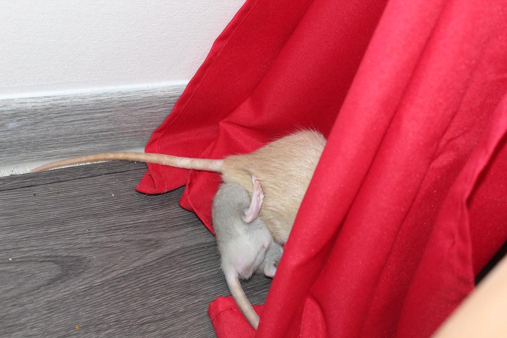 Les ratons dans le vent (la Mollusquerie) - Page 29 30666859118_4bd697df51_b