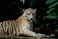 Dusit Zoo,Bangkok