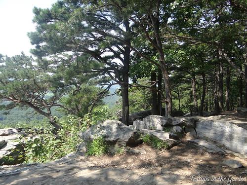 Bear's Den Overlook 2