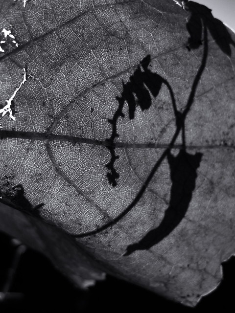 Shadow on the leaf., Canon POWERSHOT A580