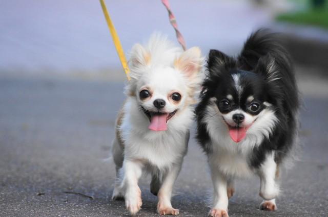 リードをつけて散歩を楽しむ犬たち