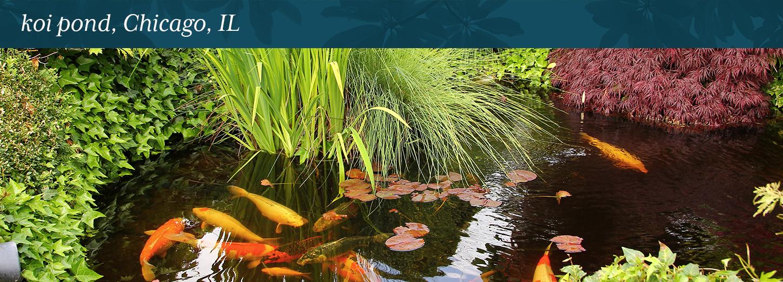 Koi Pond Chicago Il Lurvey Landscape Supply