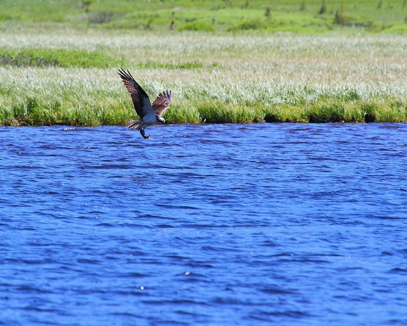 IMG_7319 Osprey over Cascade Lake