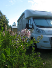 flower and our motorhome
