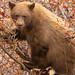 Bear Time by Amy Hudechek Photography