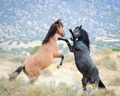 2018 Sep Wild Horses