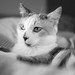 Maggie in black and white by Daisy B