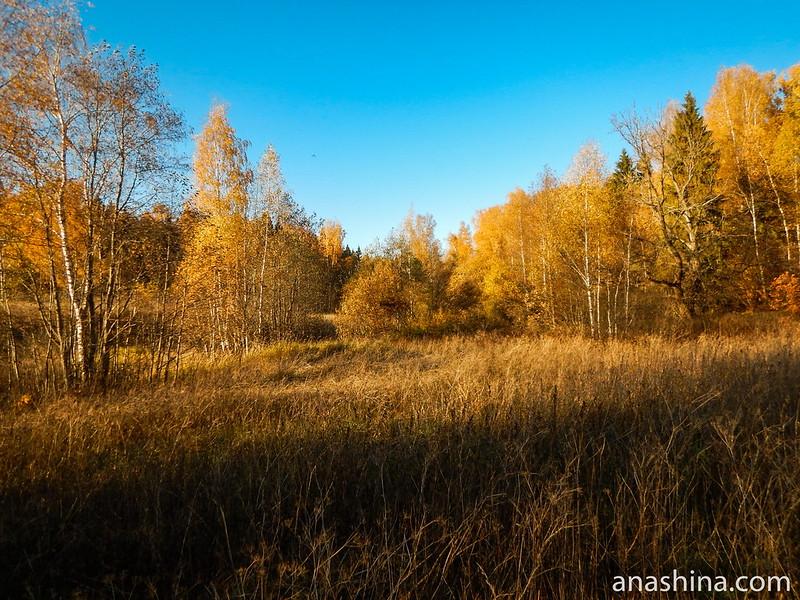 Низина, Московская область