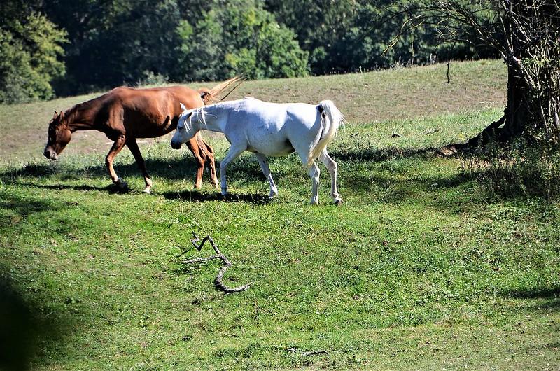 Horses 27.09 (6)
