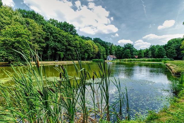 A Summer Pond