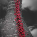 Poppies Weeping Window - Middleport Pottery, Longport. Stoke-on-Trent. Staffs.