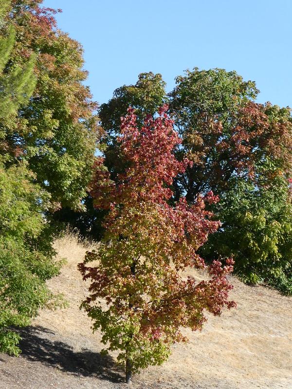 2018-10-09 - Fall Color Change, Set 2