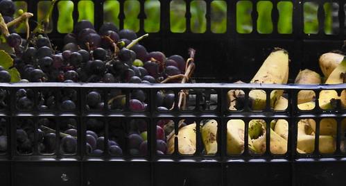 Grapes and Bananas