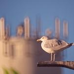 2018:10:01 17:48:42 . Bird Bokeh - Hafen Burgstaaken - Fehmarn - Schleswig-Holstein - Germany