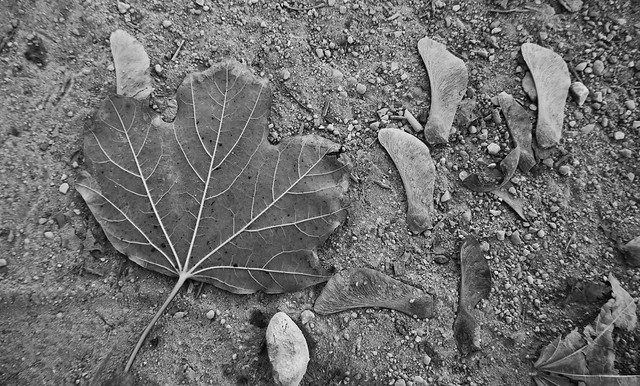 Still life with leaf, Panasonic DMC-ZS100
