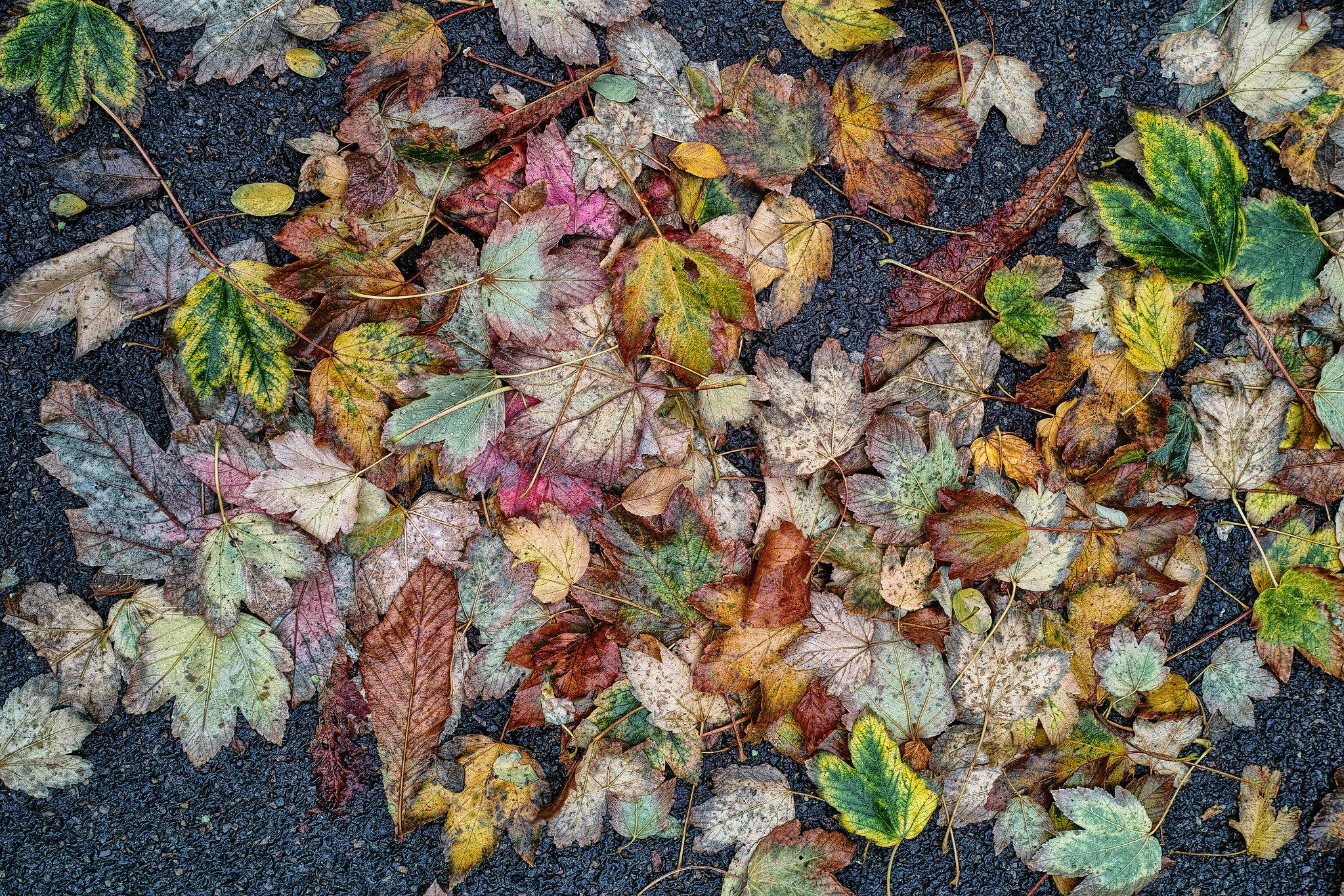 """thème du jeu de Novembre """"Couleurs d'automne"""" 44442346744_66091d193f_k"""