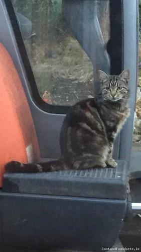 Thu, Oct 18th, 2018 Lost Female Cat - Unnamed Road, Valleymount, W91k6f8, Wicklow