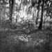 8x10 Canham. by Petro Pohodin