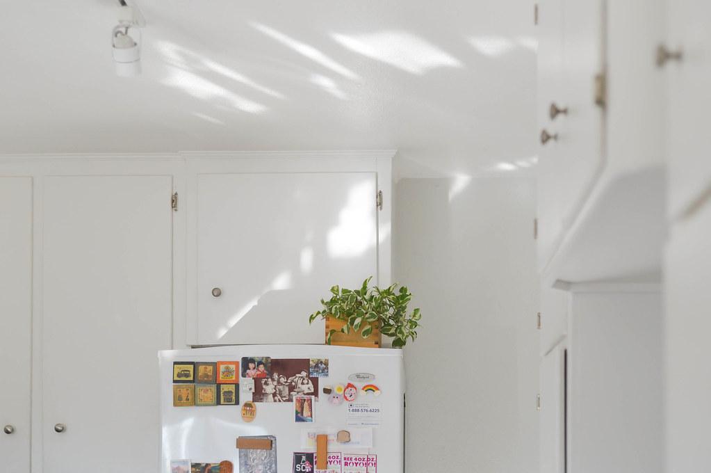 fridge-top pothos