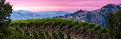 Mountain-Vineyards