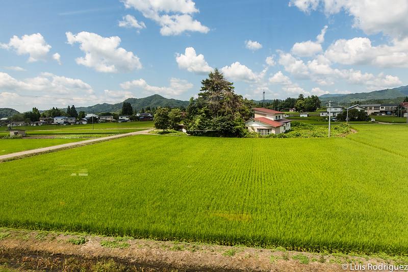 Campos de arroz desde el tren de la línea Akita Nairiku