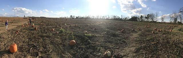 pumpkin patch 2018