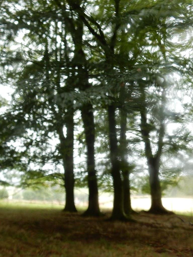 Trees through raindrops Oxted Circular