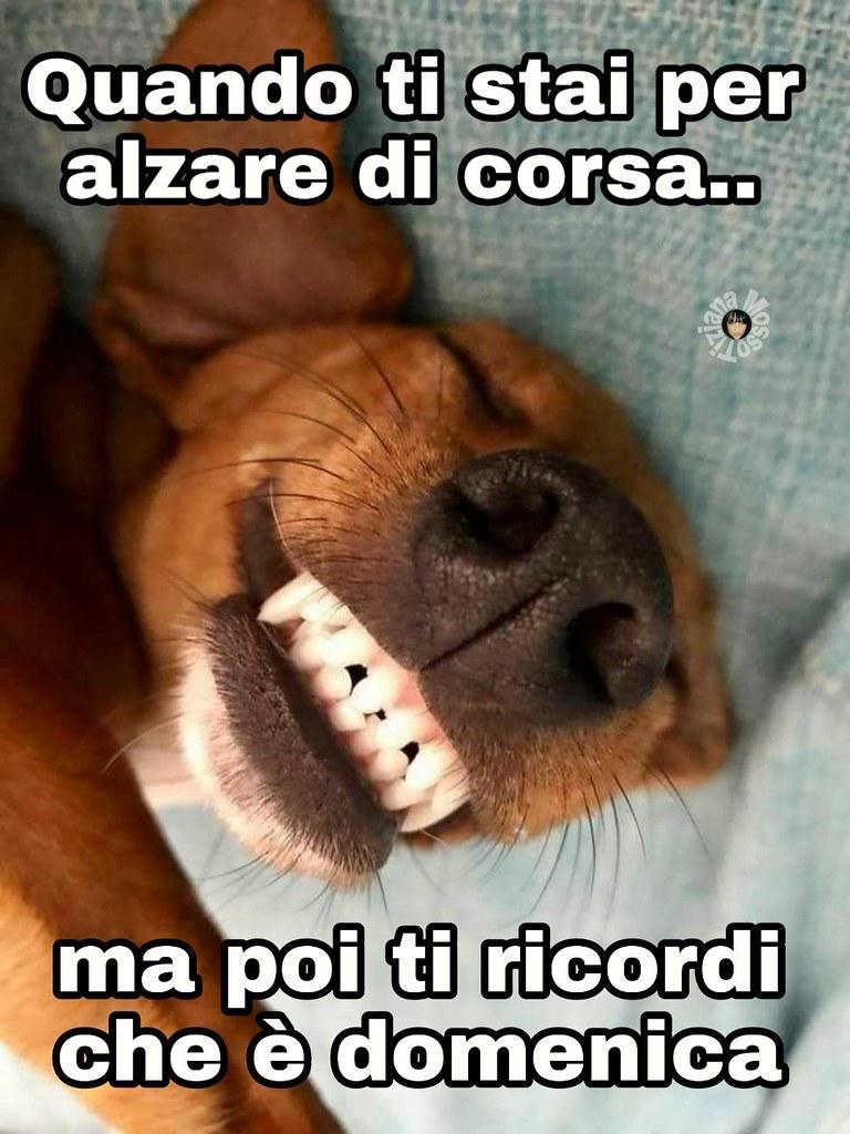 Immagini link divertenti buona domenica dog buongio for Foto buongiorno gratis