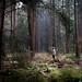 Dutch Woods in Overijssel by hansspijker