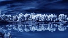 Tree And Cloud Reflections At Lino Lake