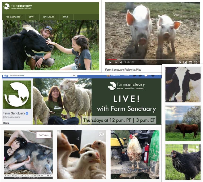 farm sanctuary collage