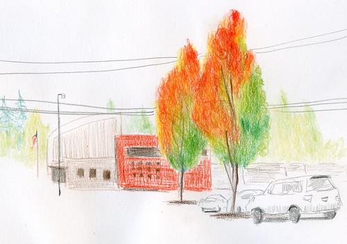 10-3-18 maple trees at Metropolitan Market, Seattle
