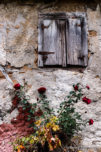 wood window roses flower old life