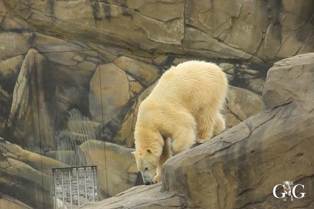 Besuch Zoo Rostock 20.10.201843