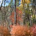 Autumn Oak Creek Canyon 1