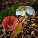 Autumn at Dove Stones - Saddleworth