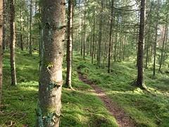Midt i skogen - Prestegårdsskogen - Askim - Norway