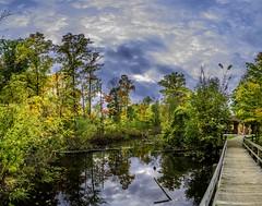 Concord Woods_20181030_17