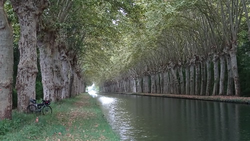 tunnel d'arbres