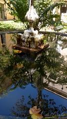 Museu Nac 170904 015 Museu Nacional UFRJ  jardim interno chafariz reflexo folha