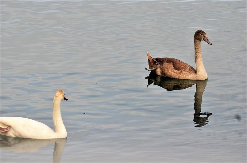 Swans 22.09 (5)