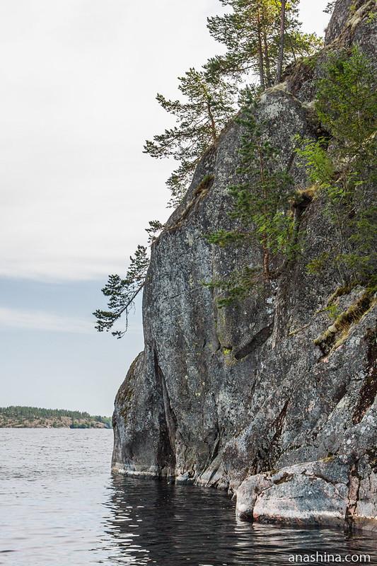Сосны на скале, Ладожское озеро