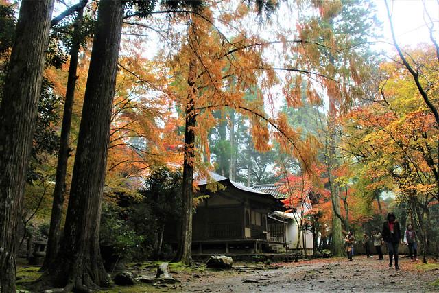kosanji-koyo018