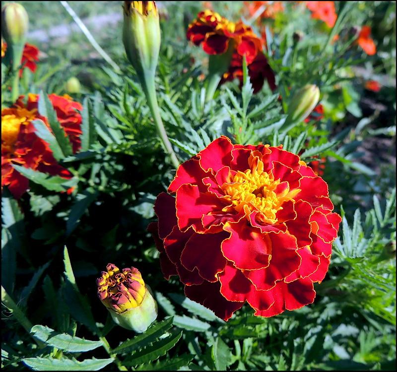 Касарги 8822 Flores