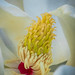 Marvelous Magnolia by FotoGrazio