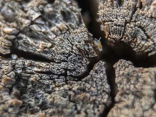 Macro madera e insecto