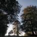 Morning in Chapeltown Park