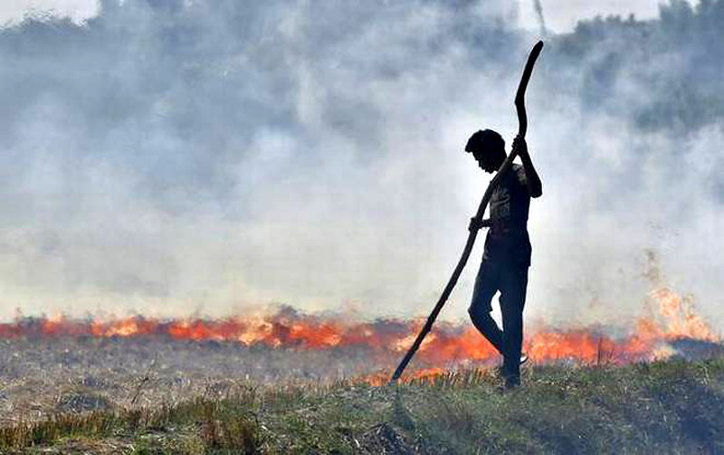 अपने खेत में पराली जलाता हुआ किसान