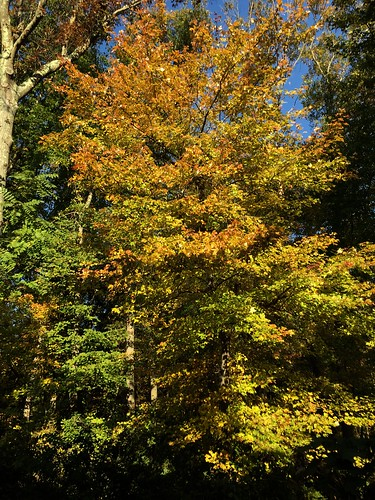 At Home 2018: Fall Colors